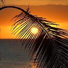 Sunrise through palm by jasongambone74