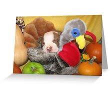 Uno Asleep With The Turkey Greeting Card