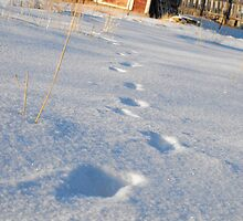 Footsteps in the snow by Penelope Lolohea