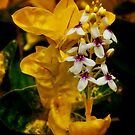 Yellow and white blooms by Jim Butera