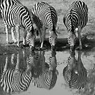 Drinking silhouetted zebras by jozi1
