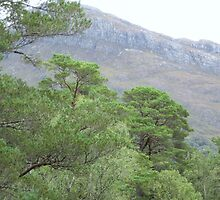 Scots Pines and Beinn a'Mhuinidh by Ray Vaughan