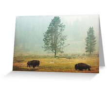 Bison Landscape IV Greeting Card