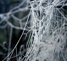 Winter cobwebs by AbsintheFairy