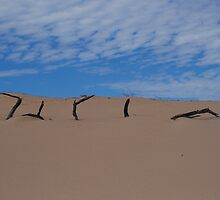 Eroding Sand Dunes - Yardie Creek, Exmouth Peninsular, WA by Sandra Albin