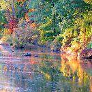 Marsh Creek at Dusk by AngieDavies
