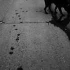 Paw prints, day and night by Brenden Bencharski