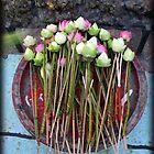 Lotus by tracyleephoto