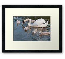 Mama Swan and Babies Framed Print