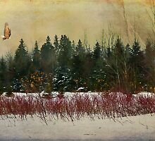 Winter Scene by Gary Smith