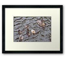 Mama Mallard Duck with Ducklings Framed Print