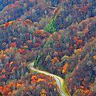 Curvy~Road by Terri~Lynn Bealle