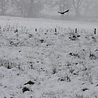 Crow in Snow by Katie Batchelor