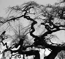 Gnarled Old Tree, Camp Hill by Mark Theriault