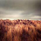 Marram Grass.. by photo-kia