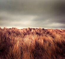 Marram Grass.. by photo-kia
