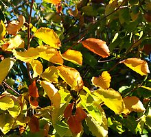 Sunlit Leaves of Russet and Green by BlueMoonRose