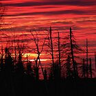 Red Sky at Night, Sailors Delight by Samantha Zroback