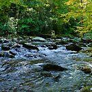 Big Creek by Phillip M. Burrow