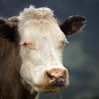 Stoned Cow - Golden, CO by Sjkphotography