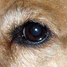 Eye of Dog by Darlene Bayne