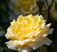 Yellow Rose With Yellow Roses In Background by Terry Aldhizer