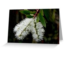 White Bottle Brush Bloom Greeting Card