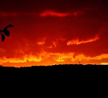 Sky on Fire by SamTheCowdog