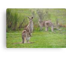 The Kangaroos of Hill End NSW Metal Print