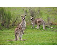 The Kangaroos of Hill End NSW Photographic Print