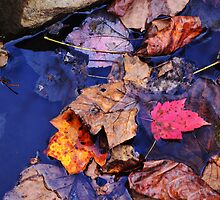 Leaves Aplenty by Dennis Rubin IPA
