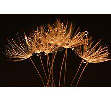 Golden Dandelions Photographic Print