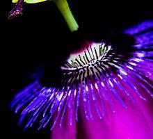 Purple passion flower by Martyn Franklin
