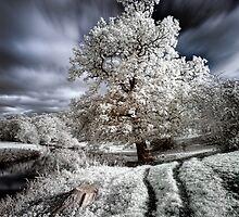 Tree tracks by Toby Pocock