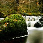 Dartmoor springs by Parnellpictures