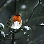 Robin Redbreast by Parnellpictures