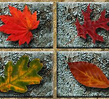 Leaves on Lichen Blocks by hootonles