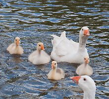 White Goose Family: Adults with Goslings by Ann Miller