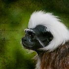 Colubus Monkey  by FoxfireGallery / FloorOne Photography