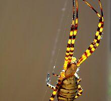Spider IV by Cameron Hampton