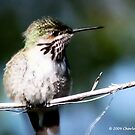 PORTRAIT OF A HUMMINGBIRD by Charlene Aycock