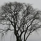 Tree. Bare. Bleak. Beautiful. by Mark Theriault