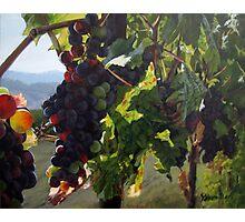 Almost Harvest Photographic Print