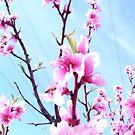 pink. by yeahitsanton