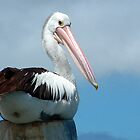 Pelican Pole Sitting by Eve Parry
