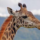 Eye Level - Arusha National Park, Tanzania,Africa by Adrian Paul