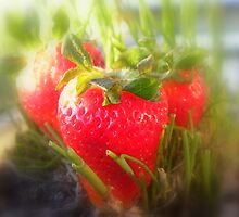 Strawberry Summer by TCL-Cologne