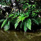 Somersby Ferns by Bev Woodman
