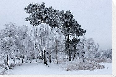 Silken painting - winter by LadyFi