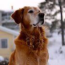I am dog by LadyFi